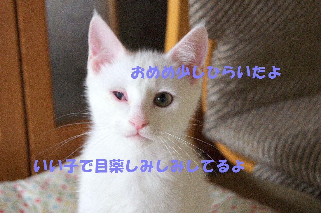 f0197682_23491367.jpg