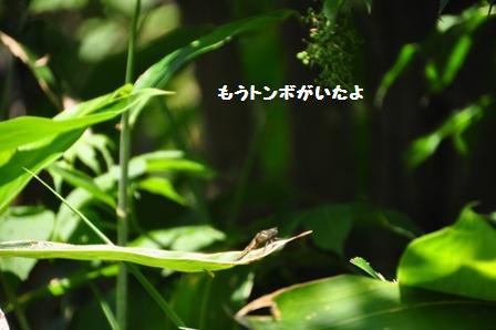 f0212597_1453144.jpg