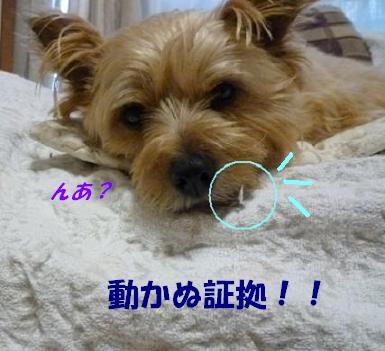 a0154801_1750724.jpg