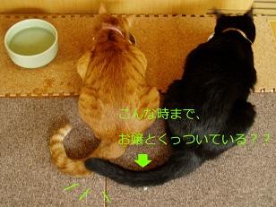 b0200310_611932.jpg