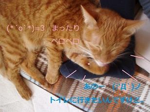 b0200310_6254127.jpg