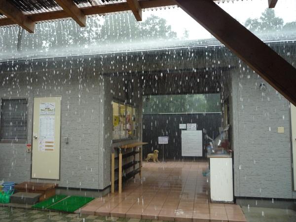 雹襲来_a0157156_1037661.jpg
