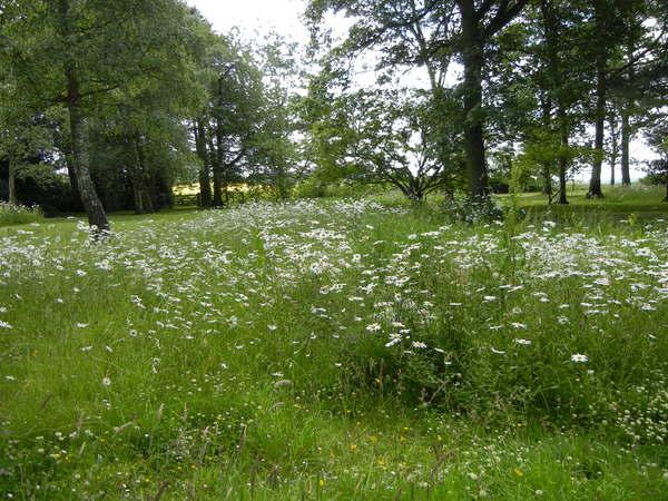 7月7日(木)イギリス旅行④コッツウォルズ散策とヒドコットガーデンへ_f0060461_8213088.jpg