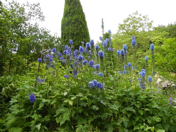 7月7日(木)イギリス旅行④コッツウォルズ散策とヒドコットガーデンへ_f0060461_829413.jpg