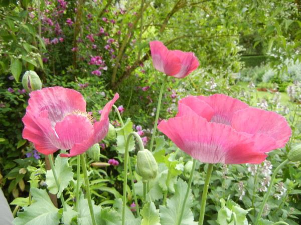 7月7日(木)イギリス旅行④コッツウォルズ散策とヒドコットガーデンへ_f0060461_8334053.jpg