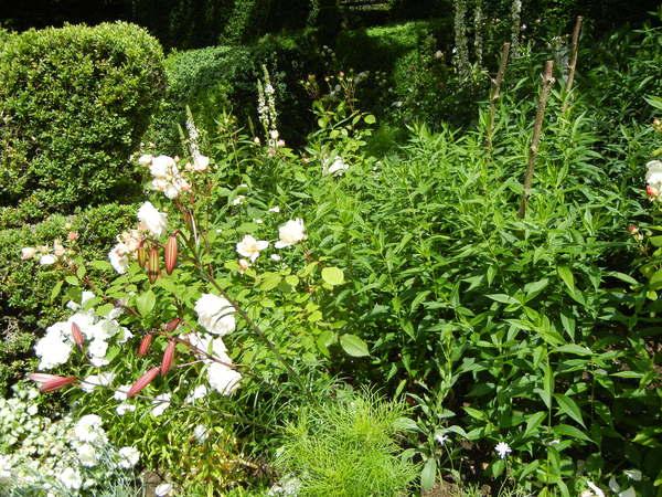 7月7日(木)イギリス旅行④コッツウォルズ散策とヒドコットガーデンへ_f0060461_8392185.jpg