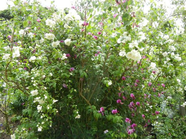 7月7日(木)イギリス旅行④コッツウォルズ散策とヒドコットガーデンへ_f0060461_8461957.jpg