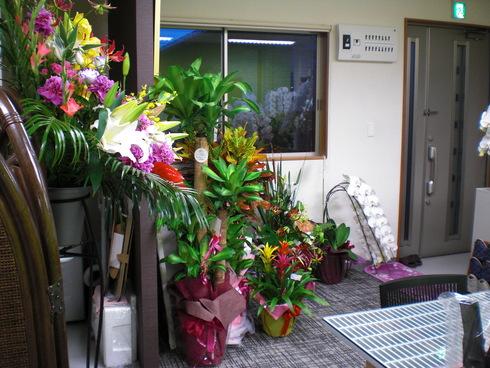 設計事務所からお花やさんへ_d0174072_803316.jpg