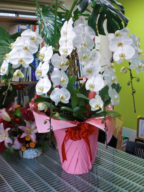 設計事務所からお花やさんへ_d0174072_81139.jpg