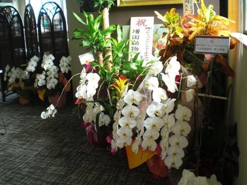 設計事務所からお花やさんへ_d0174072_812179.jpg