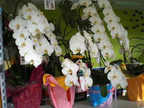 設計事務所からお花やさんへ_d0174072_813613.jpg