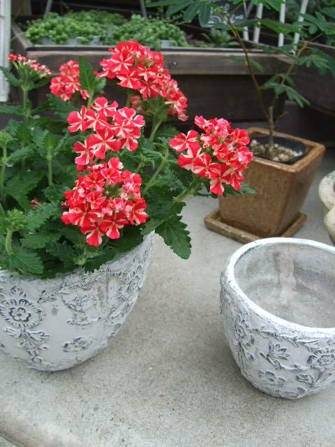 オークリーフ(サマーグリーンと山の花たち)_f0049672_1636546.jpg