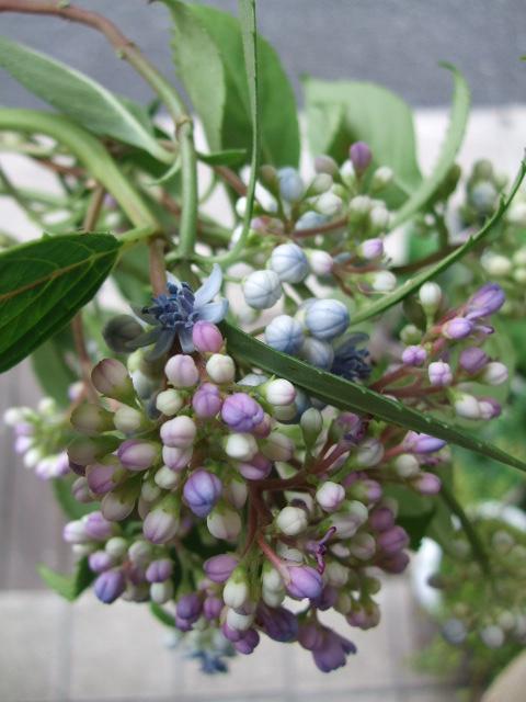 オークリーフ(サマーグリーンと山の花たち)_f0049672_1650403.jpg