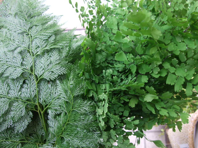 オークリーフ(サマーグリーンと山の花たち)_f0049672_1650492.jpg