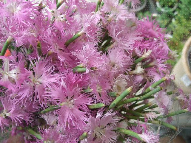オークリーフ(サマーグリーンと山の花たち)_f0049672_16505058.jpg