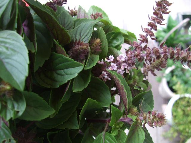 オークリーフ(サマーグリーンと山の花たち)_f0049672_16513979.jpg