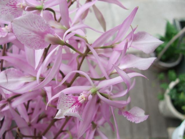オークリーフ(サマーグリーンと山の花たち)_f0049672_16521831.jpg