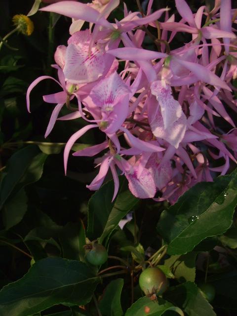オークリーフ(サマーグリーンと山の花たち)_f0049672_1712916.jpg