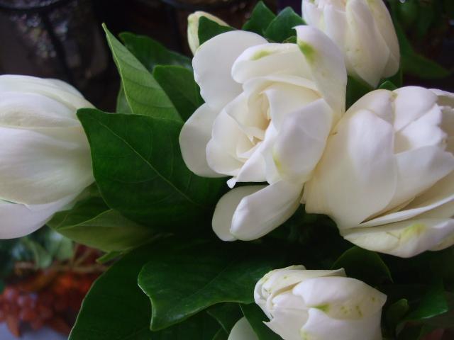 オークリーフ(サマーグリーンと山の花たち)_f0049672_172565.jpg