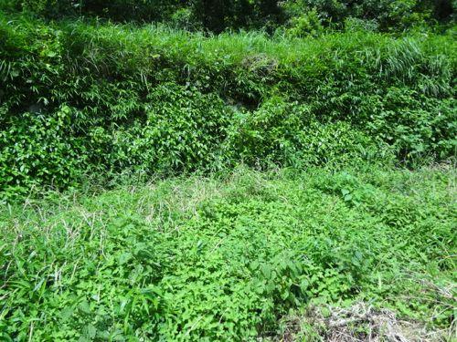 草刈り_c0169176_17232681.jpg