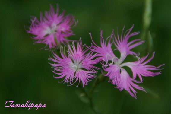 路傍の花 【72】 _f0212217_7285043.jpg