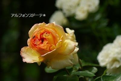 f0170524_11434275.jpg