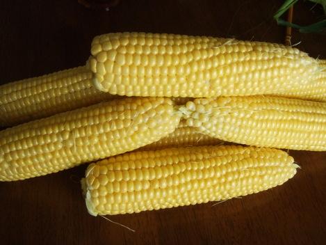 トウモロコシの収穫...._b0137932_14103583.jpg