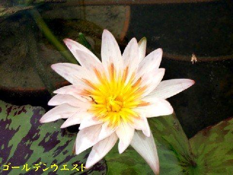 b0012636_9491419.jpg