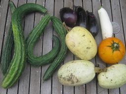 本日の収穫です_a0139242_7555070.jpg