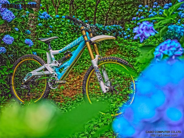hydrangea trail II_b0049658_9494745.jpg