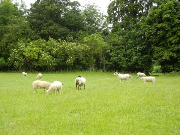 7月9日(土)イギリス旅行④ウィンチクム村~シェイクスピアの生家へ_f0060461_2215159.jpg