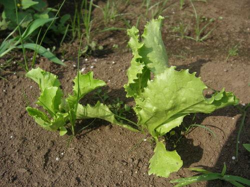 梅雨が明けて、夏野菜がどっさり_c0053863_17293947.jpg