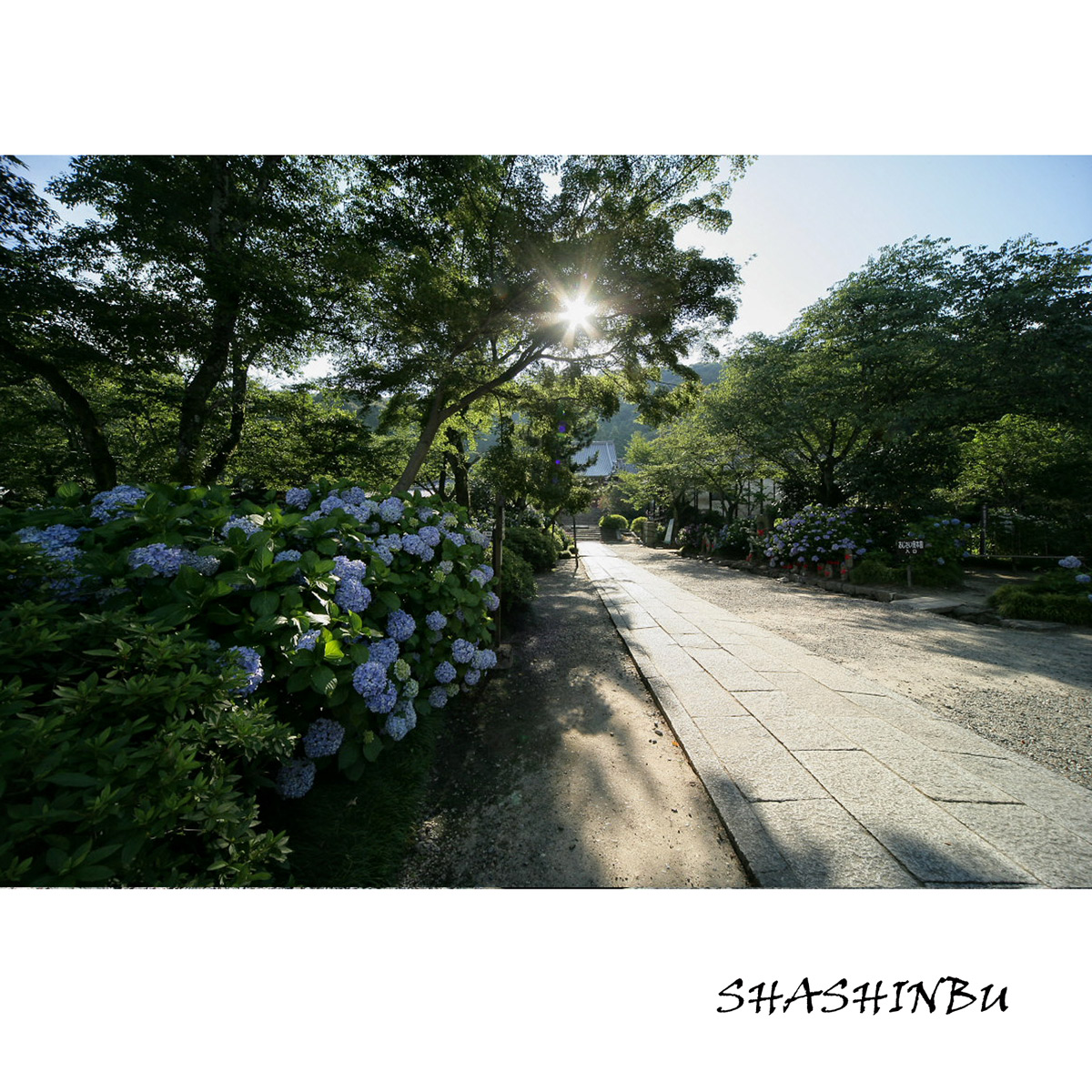 紫陽花 2011  <矢田寺>_f0021869_022550.jpg