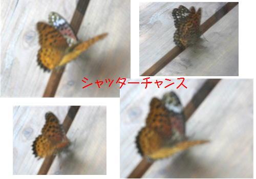 f0003174_16471349.jpg
