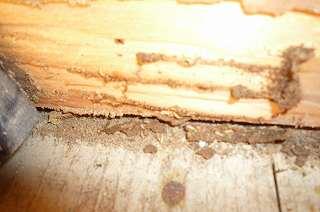 白蟻被害_a0137981_14464229.jpg