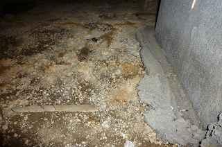 白蟻被害_a0137981_14483543.jpg
