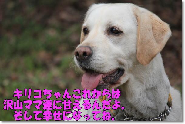 b0136683_21533749.jpg