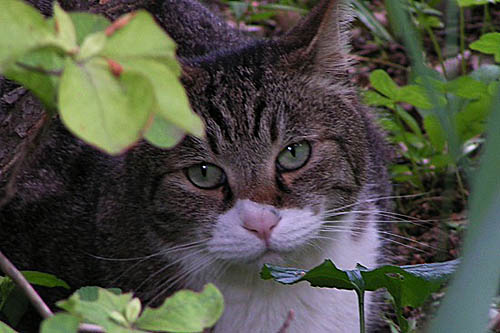 可愛らしいヤマモモと、ときどき猫_f0030085_20512970.jpg