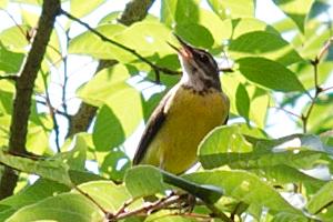 今日、一日中庭にいた、何ていう鳥なんだろう?。_b0194208_2133654.jpg