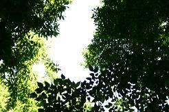 風街ろまん いい匂い 125 「某謀氏の某昭和PV」_c0121570_18151892.jpg