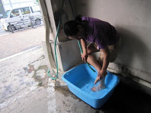 足洗い場_d0246875_171768.jpg