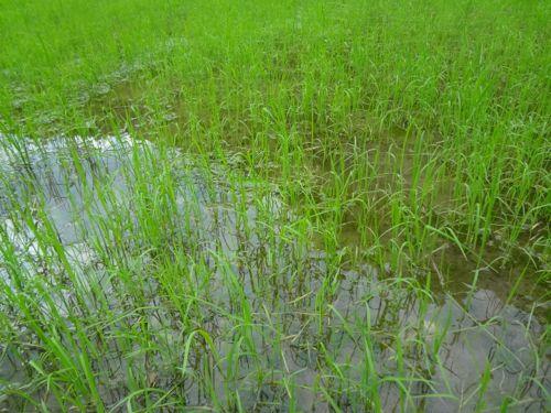 草刈り_c0169176_18103146.jpg