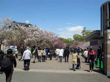 4/19.大阪造幣局通り抜け2._d0136282_1623214.jpg