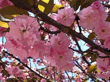 4/19.大阪造幣局通り抜け2._d0136282_16241865.jpg
