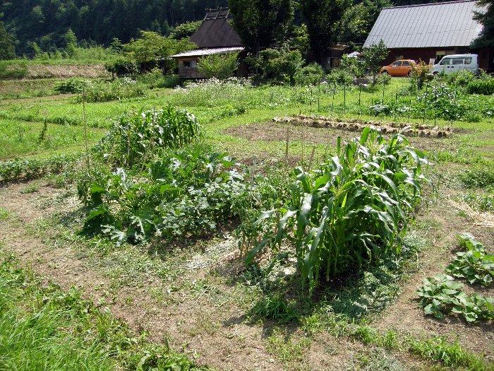 草刈り_c0057390_23181789.jpg