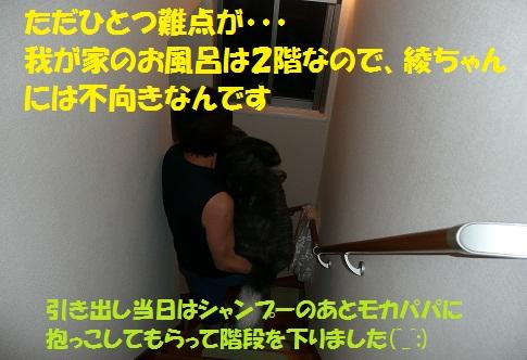 f0121712_1755886.jpg