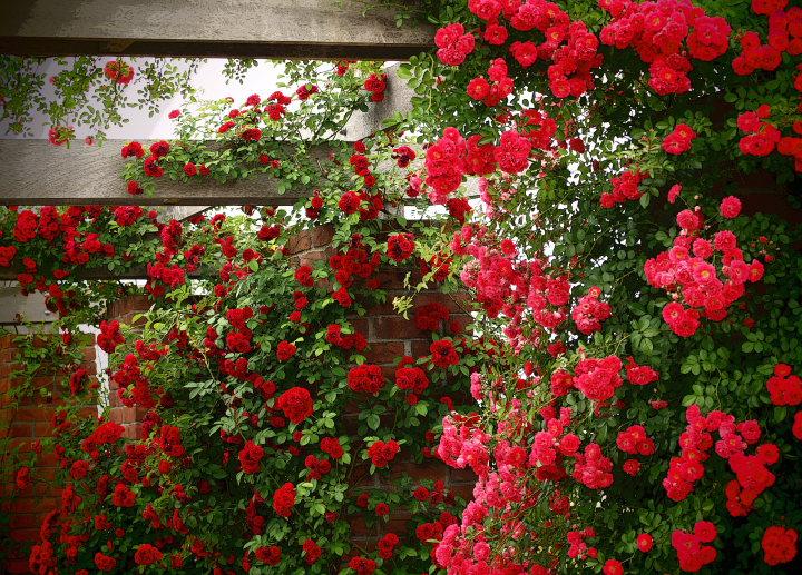 イメージの庭_e0169421_10544553.jpg