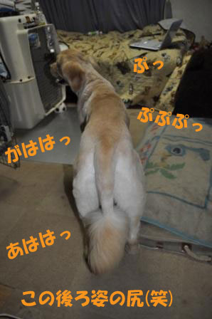 f0176830_20481157.jpg