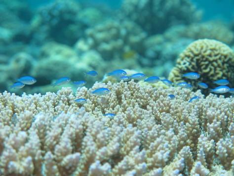 7月11日水納島ブルーに包まれて♪_c0070933_19491791.jpg