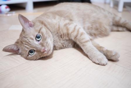 だらだらりん猫 しぇるろった編。_a0143140_22333229.jpg